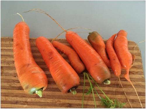 purse carrots