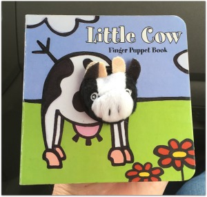 south hill cow book