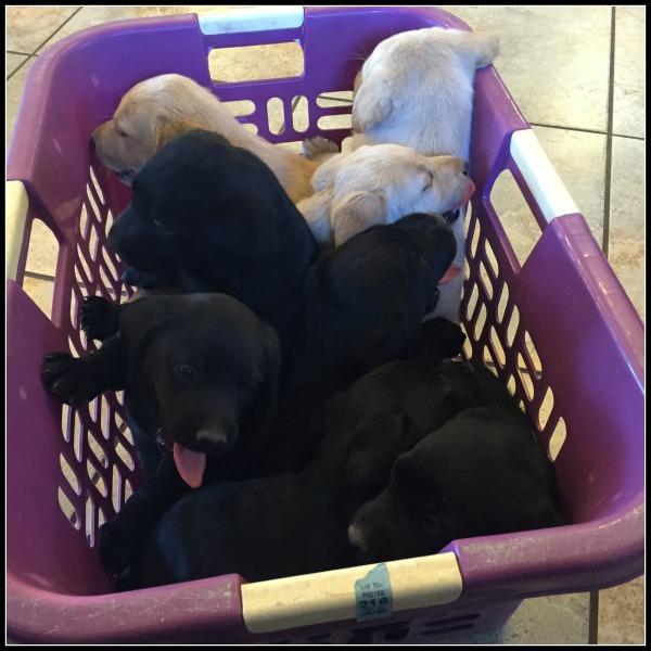 puppie baskets