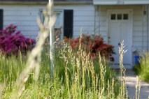 Long Grass Abandoned Cape Cod Single Family Home Maryland USA