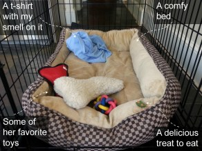 Dog crate with bedding, toys, and treats for the dog you adopt.