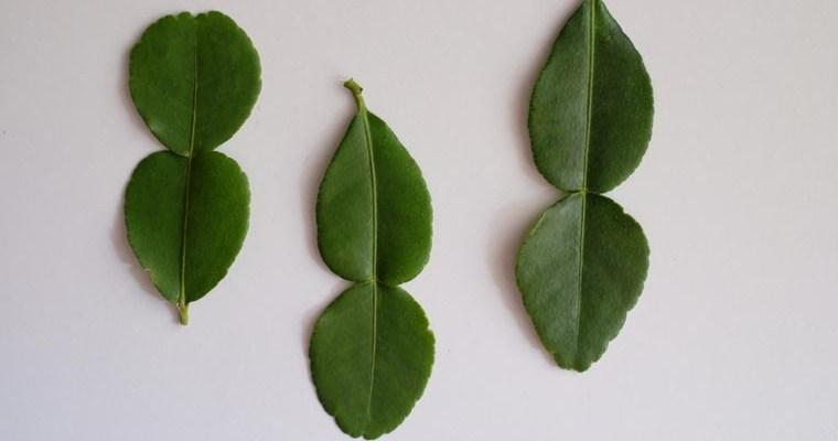 Kaffir Lime Leaves & Powder