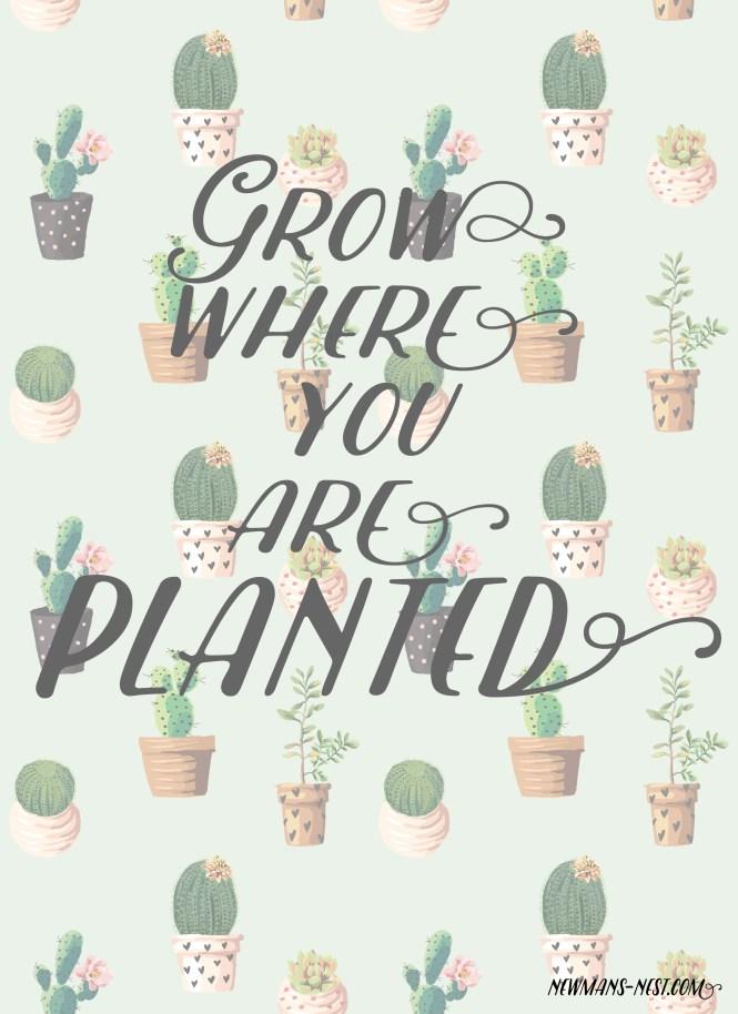 Grow-01