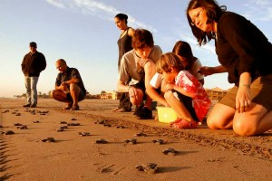 Tourists release baby turtles into the ocean at Estrella del Mar Resort