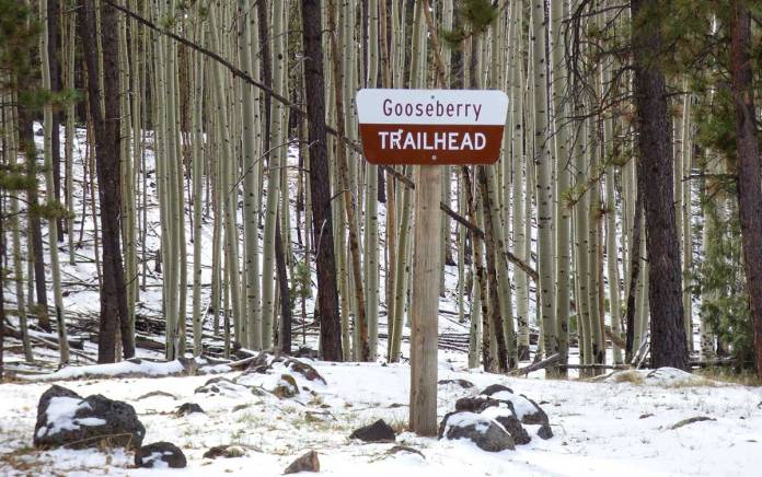 Gooseberry Trail on Mount Taylor, part of the Continental Divide trail system