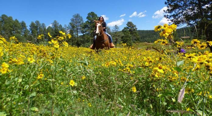 Horseback riding at Inn of the Mountain Gods