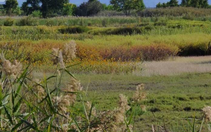 Bosque del Apache meadow