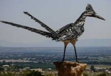 Las Cruces roadrunner