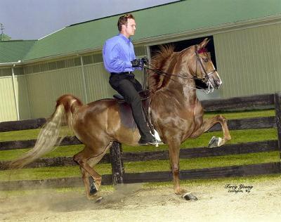 rkb-sizzle-saddle-rt
