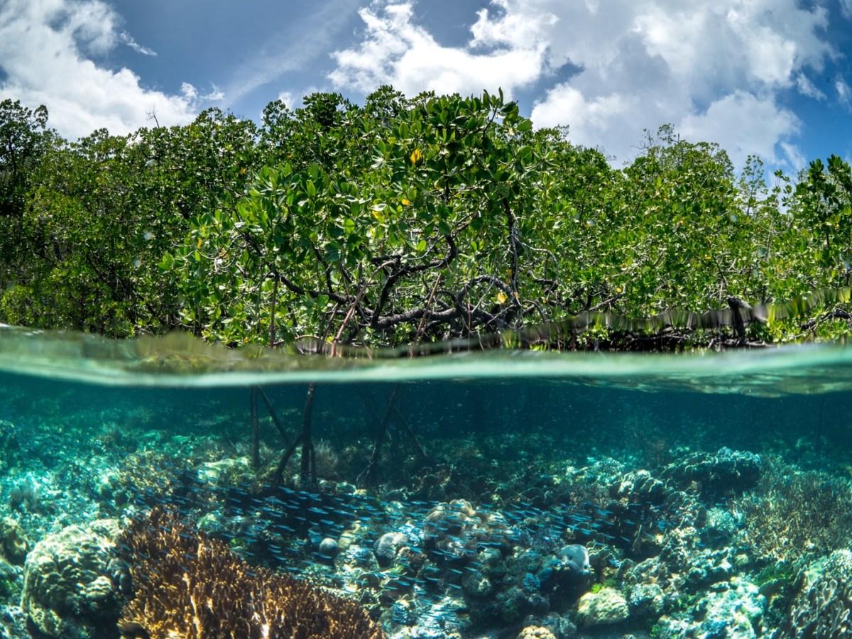 Mangrove - New Naratif