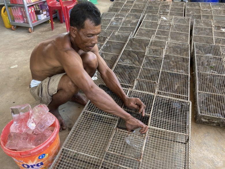 Rat broker Lor Sam Ath places pieces of ice in the cages to allow the rodents to hydrate as they make their way across the border to Vietnam.