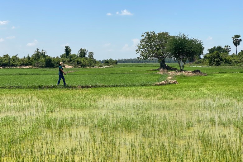 Yorn Riya, an unemployed garment factory worker, walks near her family's rice field in Cambodia's Prey Veng Province in June 2021.