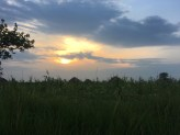 Huts hidden in the grass. My view on the way home