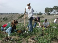 Community-based Restoration at Newport Bay