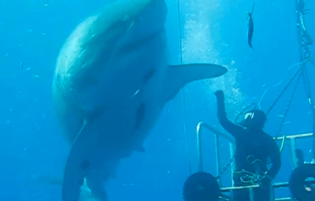 great white high five