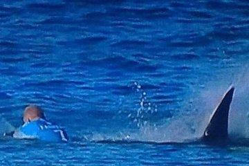 Mick Fanning Shark Attack J-Bay