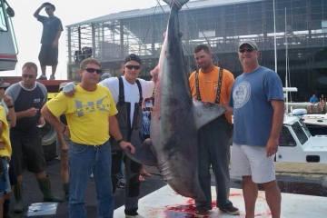 Newport Monster Shark Tournament