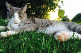 Missing Cat Newport Middletown Portsmouth RI