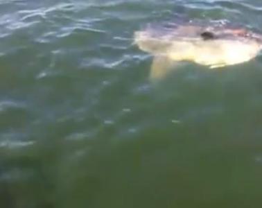Sunfish michael bergin