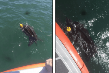Coast Guard Leatherback Turtle