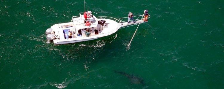 white_shark_luke