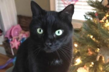 dexter cat newport ri