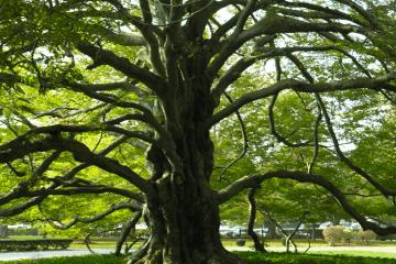 newport ri tree
