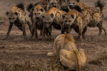 Adam Zaff National Geographic
