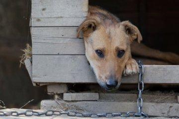 RI Animal Abuse Registry