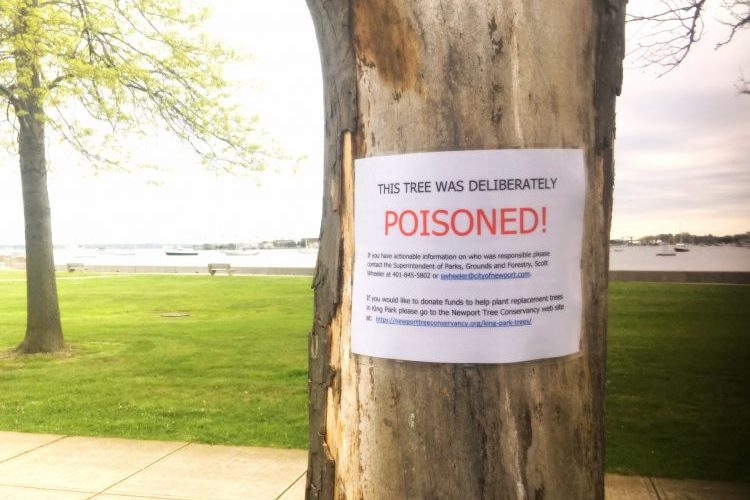 poisoned trees Newport RI