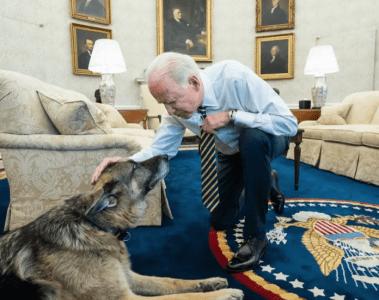 Biden Dog Champ