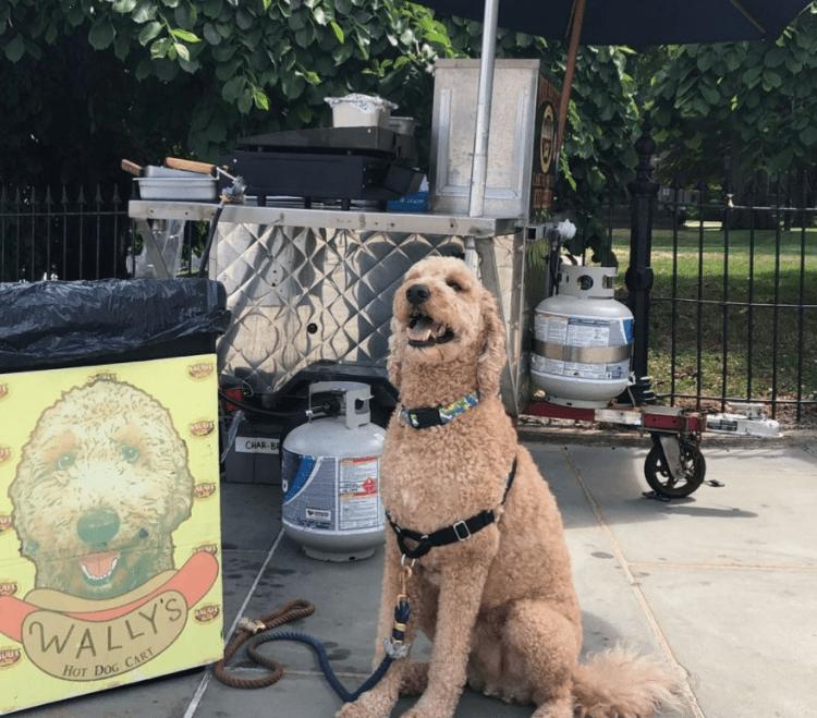 Wallys Dog Cart