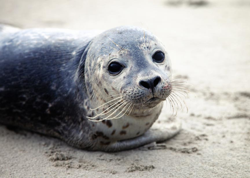 Save The Bay Seal Tours on Narragansett Bay