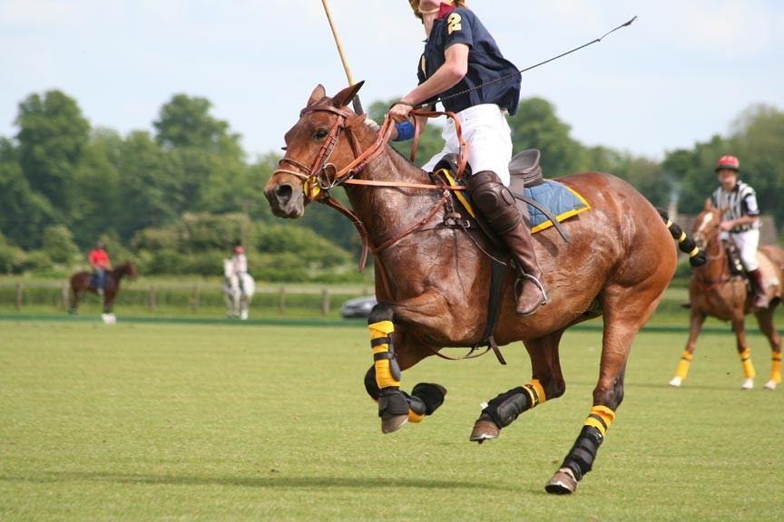 Newport Polo – Experience the Sport of Kings