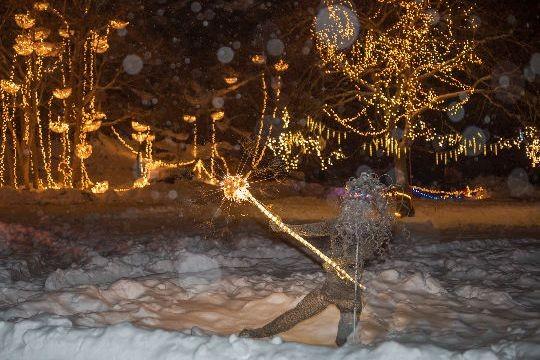11th Annual Illuminated Garden at Ballard Park