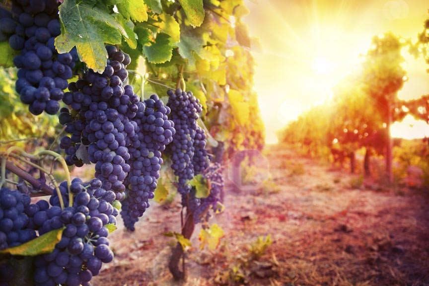 Get A Taste of Newport Vineyards And Wineries