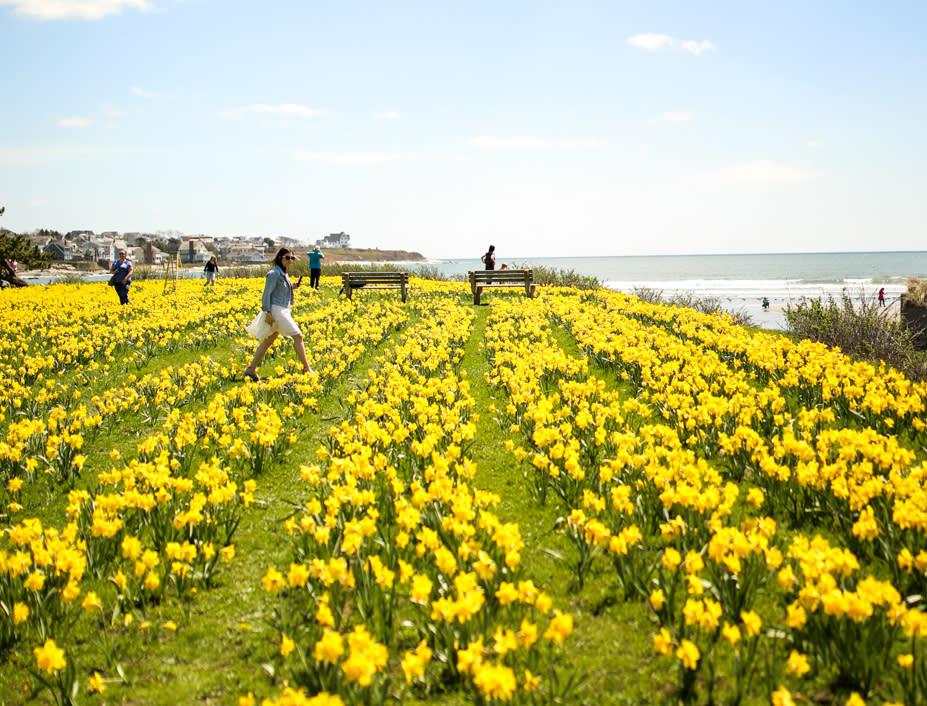 Newport Daffodil Festival Getaway