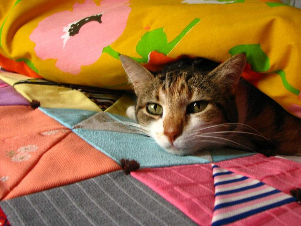 photo of cat on tied quilt