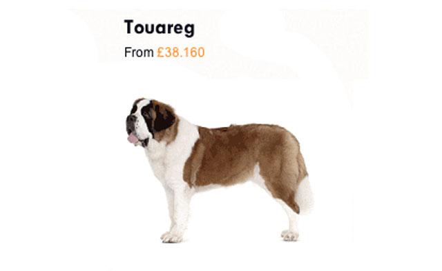 (Touareg: gigante, forte e poderoso como um São Bernardo).