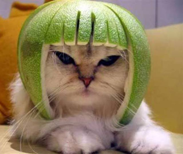 cats_watermelon