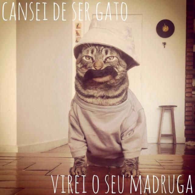 catsie1
