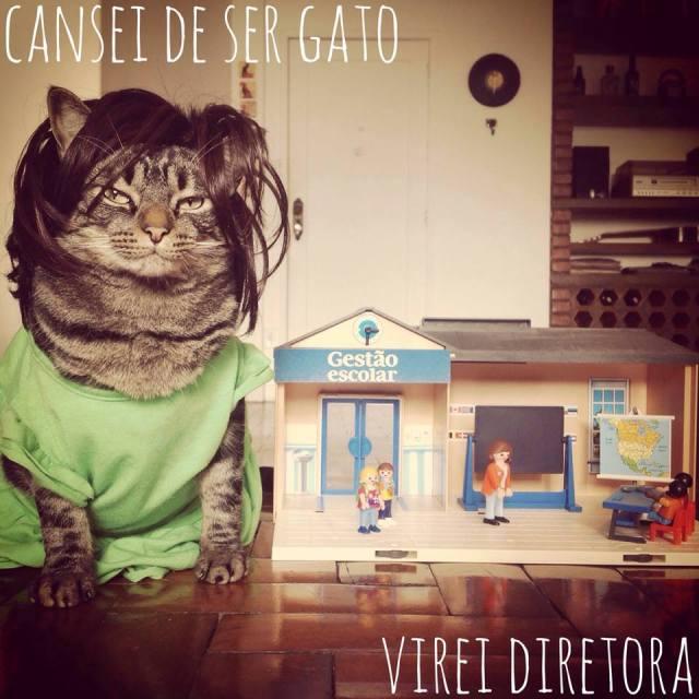 catsie2