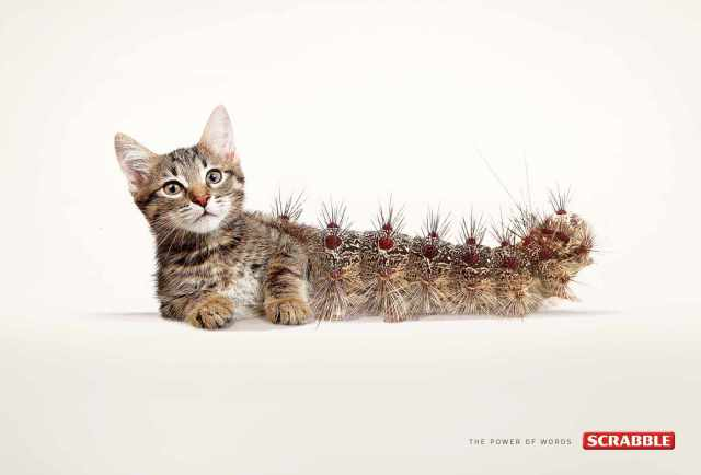 scrabble_cat