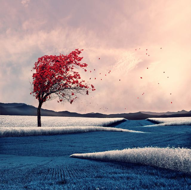 Tree-dispersion__880