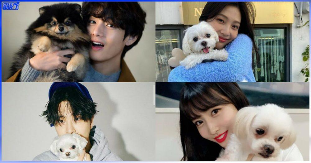 K-Pop လောကထဲက နာမည်ကြီး Idol တွေနဲ့ သူတို့ မွေးမြူထားတဲ့ အချစ်တော် ပါပီလေးများ