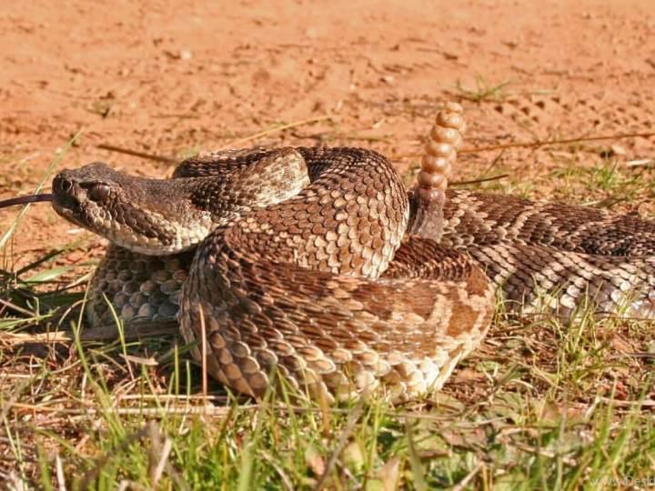 Некоторые виды змей легко выживают в сухих пустынях. Но как им это удается?