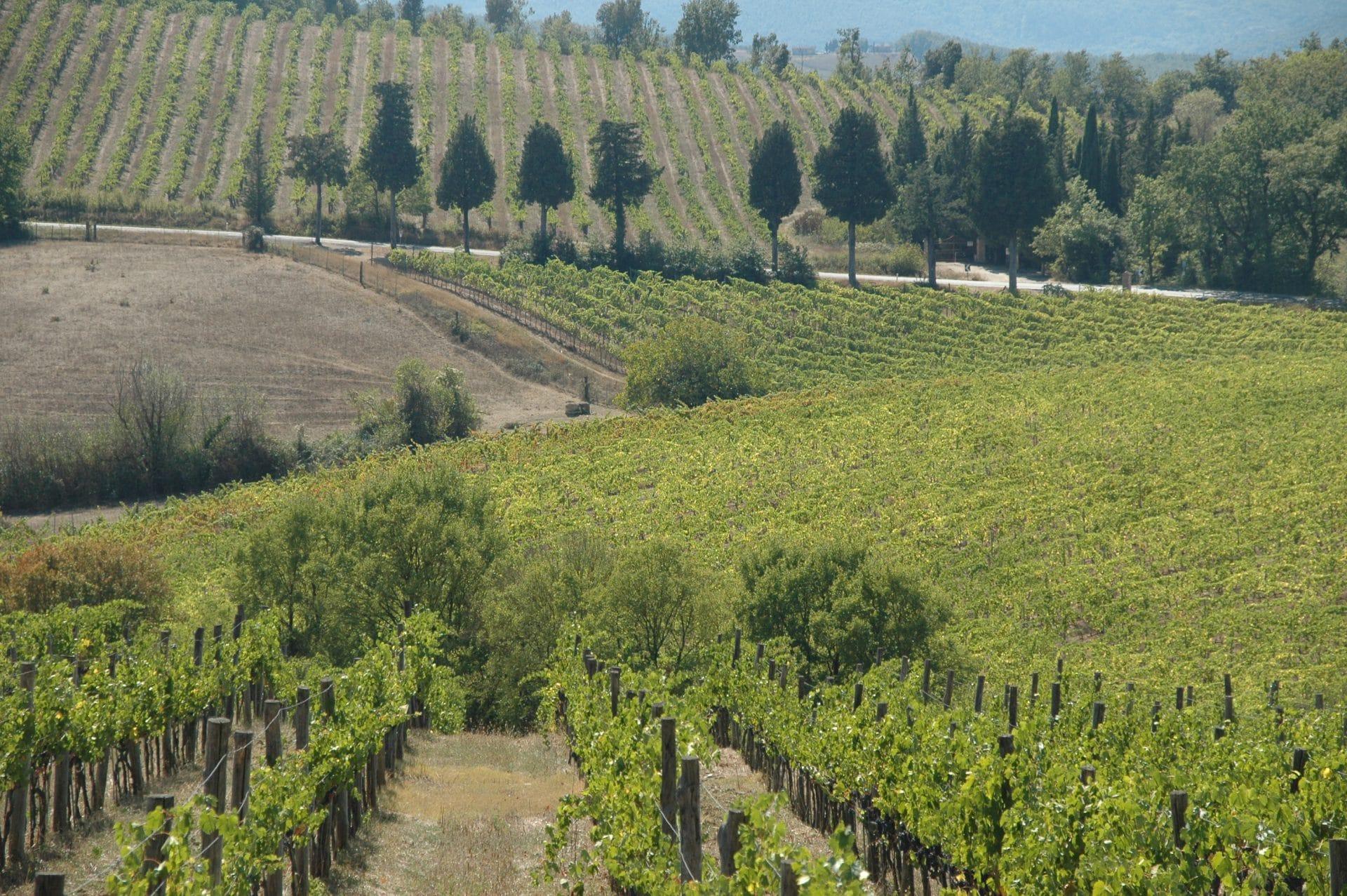 Comprare e investire nel vino; la nuova frontiera del Real Estate internazionale