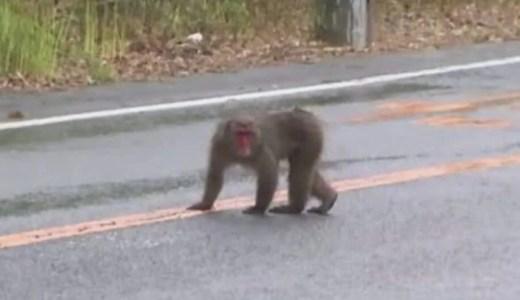 野生の猿が静岡県牧之原市新庄で出没!原因と対策は?