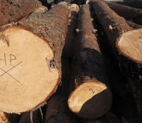 Участковыми Георгиевского городского округа установлен подозреваемый в незаконной рубке леса