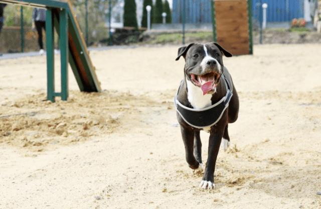 В Ставрополе появилась уже третья площадка для собак